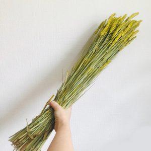 Gedroogde tarwe geel droogbloem bos
