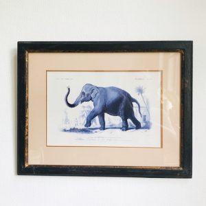 dictionnaire universel d'histoire naturelle olifant