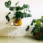 bloempot kamerplant okergeel